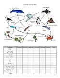 Ocean Food Web Practice Worksheet
