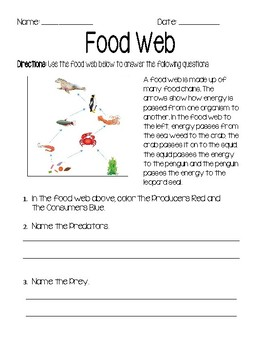 Ocean Food Web Worksheet & Assessment