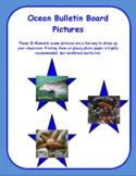 Ocean Habitat Pictures