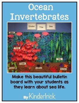 Ocean Invertebrates