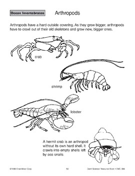Ocean Invertebrates: Arthropods and Echinoderms