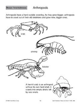 Ocean Invertebrates: Arthropods and Echinoderms