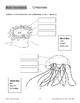 Ocean Invertebrates: Jellyfish and Picture Cards