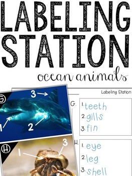 Ocean: Label-It (Writing Center Activity)