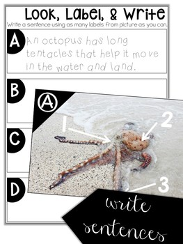 Labeling Oceans