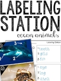 Labeling Oceans - Writing & Labeling For Beginning Writers