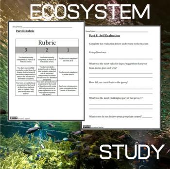 Ocean Life Ecosystem Project