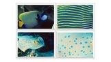 Ocean Life - Matching Activity