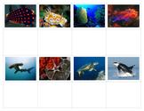 Ocean Life:  Mini Matching Cards