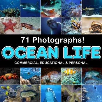Photos Photographs SEA LIFE, clip art