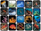 """Ocean Life"" Picture Matching/Flashcards/Memory Game for Autism"