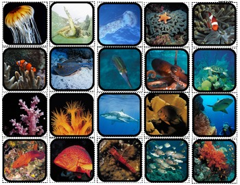"""""""Ocean Life"""" Picture Matching/Flashcards/Memory Game for Autism"""