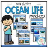 Ocean Life Real Photo Cards
