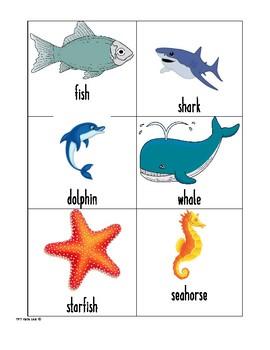 Ocean Life Vocabulary Cards