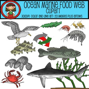 Ocean Marine Food Web Clip Art Set - 20 images plus arrows