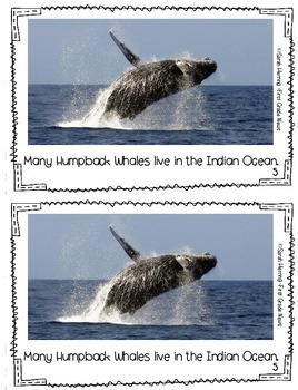 Ocean Mini Book