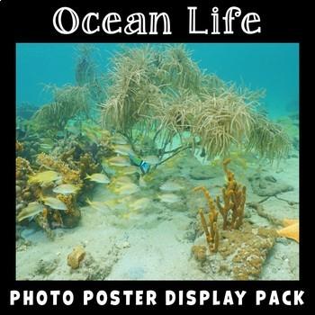 Ocean Life Photo Poster Display Pack