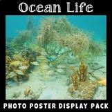 Ocean Life Posters | Science Display | Habitats | Animals | Vocabulary Posters