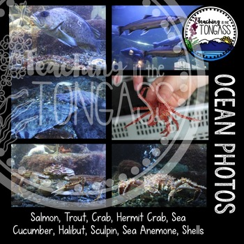 Ocean Photos