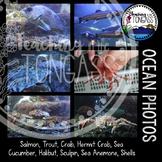 Ocean Photos Bundle