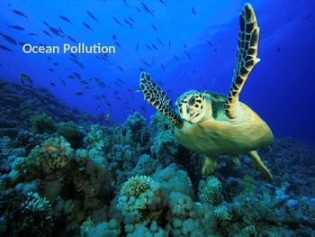 Ocean Pollution: Causes, Effects and Solutions