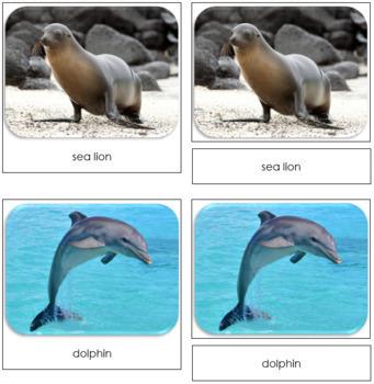 Ocean Safari Toob Cards - Montessori