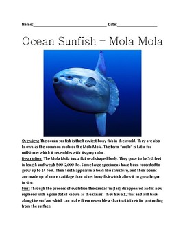 Ocean Sunfish - Mola Mola largest Bony Fish review article facts questions