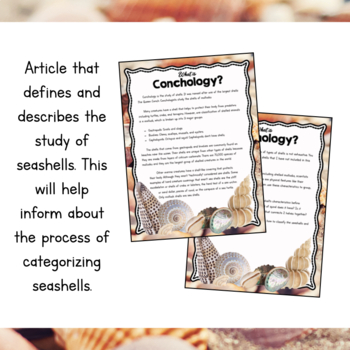 Ocean Unit Study: Sea Shell Sorting and Classification