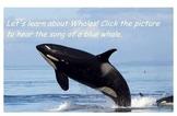 Ocean Unit Whale smart board presentation
