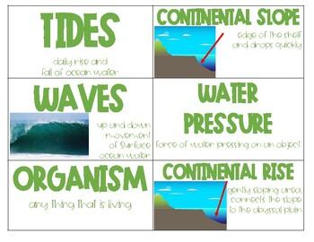 Ocean Vocab/ Word Wall Cards