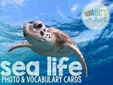 Ocean Photo & Vocabulary Cards