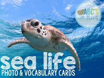 Ocean Photo & Vocabulary Cards