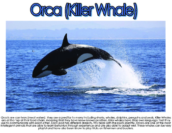 Ocean: Whales and Dolphins