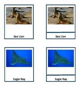 Ocean Wildlife - Montessori 3 Part Cards