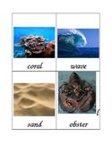 Ocean Word Wall Cards