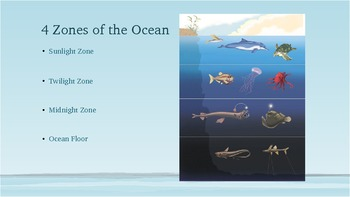 Ocean Zone Habitats By Sarah Mcelroy Teachers Pay Teachers