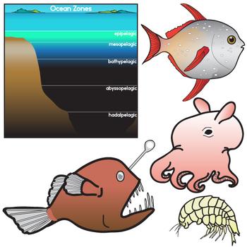 Ocean Zones and Creatures Clip Art Set - Oceanography by ...