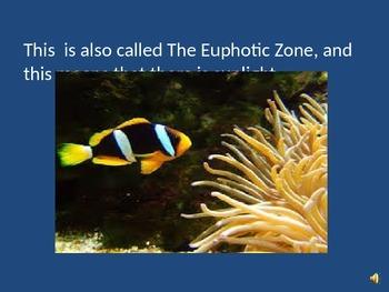 Ocean Zones, Differentiated...Grade Level Content, Simple Language