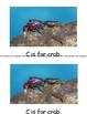 Ocean animal student alphabet book
