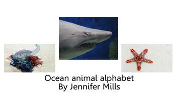 Ocean animals reading growing bundle