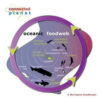 Ocean food web chart