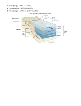Ocean in a Jar AND Marine Zone Scale Activites