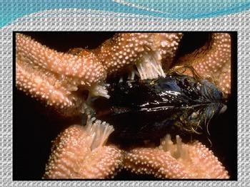 Oceans - Life in the Ocean