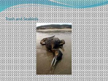 Oceans - Ocean Pollution