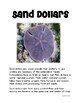 Ocean Animals Sand Dollars