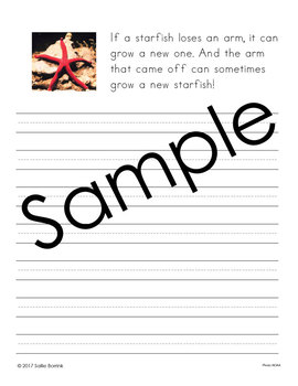 Oceans Unit - Copywork - Print and Cursive - Handwriting