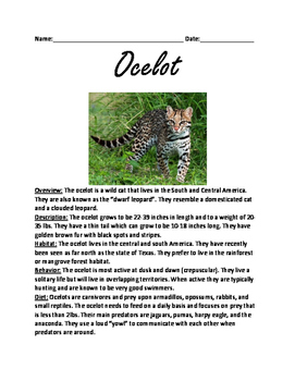 Ocelot - Wild Cat - informational article lesson questions facts