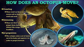Octopus - PowerPoint & Activities