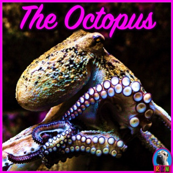 Octopus - PowerPoint & Activities