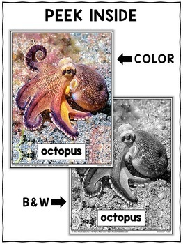 Close Reading Passage - Octopus Activities